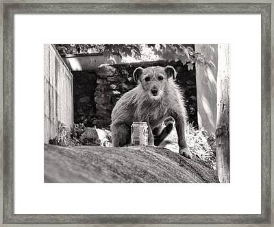 Dog Days Of Summer Framed Print