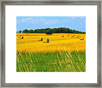 Dog Days Of Summer Framed Print by Frozen in Time Fine Art Photography