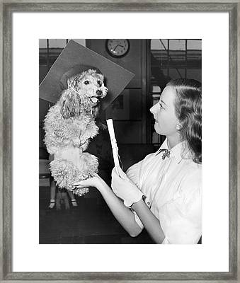 Dog Graduates From School Framed Print by Underwood Archives
