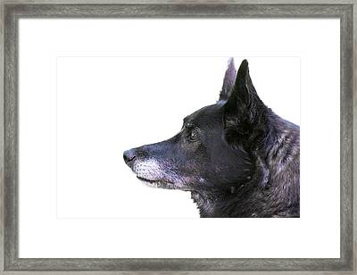 Dog Head Profile Isolated On White Framed Print