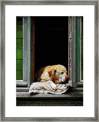 Dog In A Window Framed Print