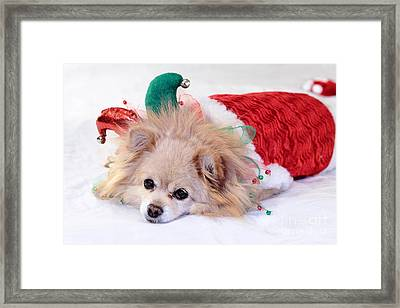 Dog In Christmas Costume Framed Print