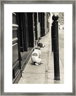 Dog In Paris Framed Print by Diane Diederich