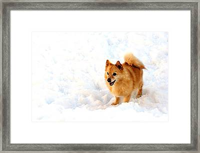 Dog In Snow Framed Print