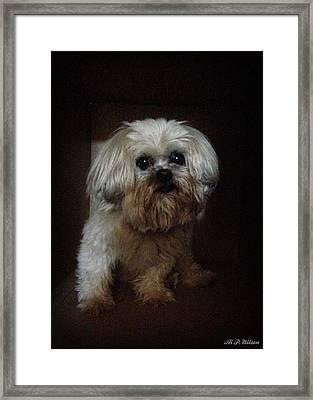 Dog In The Box Framed Print