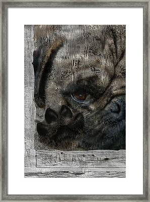 Dog In The Window Framed Print by Jack Zulli