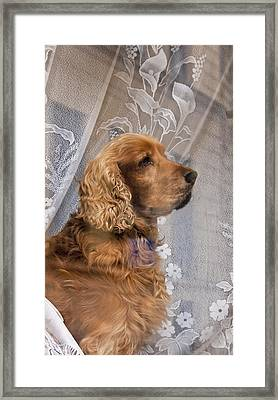 Framed Print featuring the photograph Dog In Window by Dennis Cox WorldViews