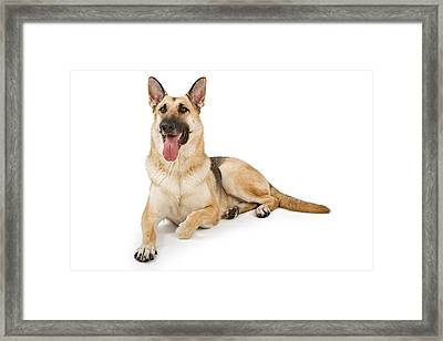 Dog Isolated On White Framed Print by Susan Schmitz