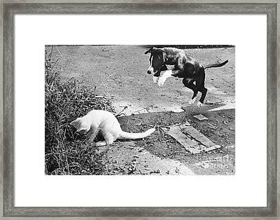 Dog Jumping On An Unsuspecting Kitten Framed Print by Lynn Lennon