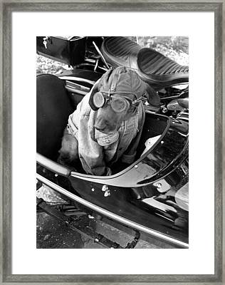 Dog Likes To Ride Framed Print