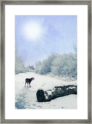 Dog Looking Back Framed Print by Amanda Elwell