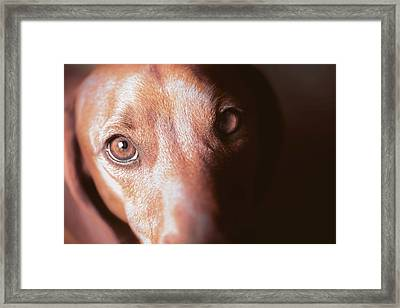 Dog Looking Towards Camera Framed Print by Ktsdesign