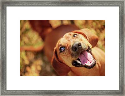 Dog Looking Up With Mouth Open Framed Print by Ktsdesign