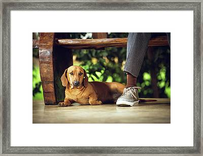 Dog Lying Down On Floor Under Table Framed Print by Ktsdesign