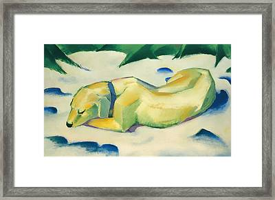 Dog Lying In The Snow Framed Print by Mountain Dreams