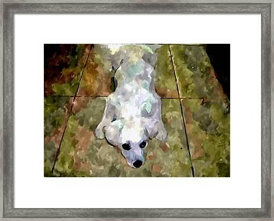 Dog Lying On Floor  Framed Print by Lanjee Chee