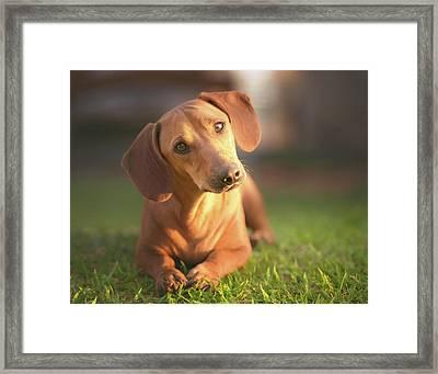 Dog Lying On Grass Framed Print by Ktsdesign