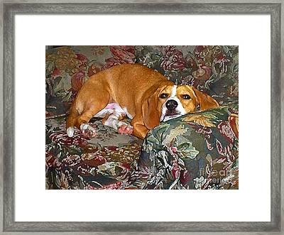 Dog - Mr. Oliver Is Comfy Framed Print by Maureen Tillman
