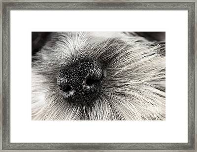 Dog Nose  Framed Print by Stephanie Frey