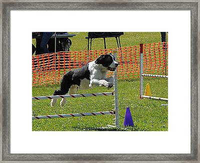 Framed Print featuring the photograph Dog Obedience by Paul Miller