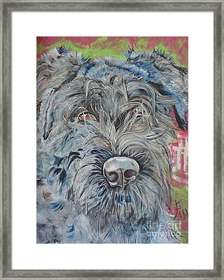Dog Of Flanders The Bouvier Framed Print by PainterArtist FIN