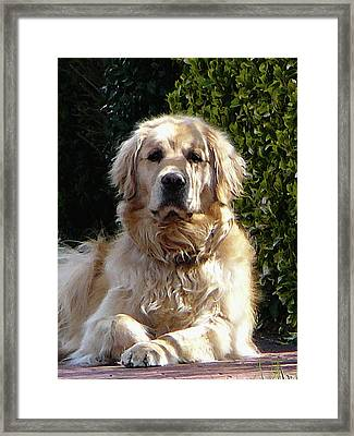 Dog On Guard Framed Print