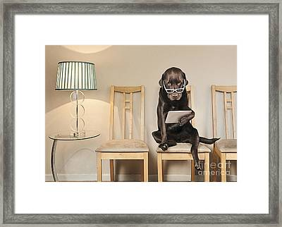 Dog On Ipad Framed Print by Justin Paget