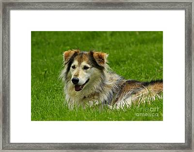 Dog On It I'm Tired Framed Print by Inspired Nature Photography Fine Art Photography
