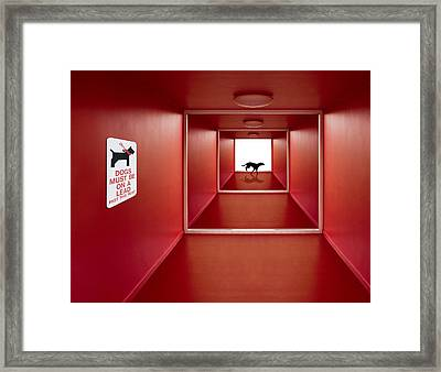 Dog On The Loose Framed Print