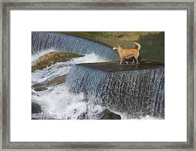 Dog On The Waterfall, Pingnan, Fujian Framed Print by Keren Su