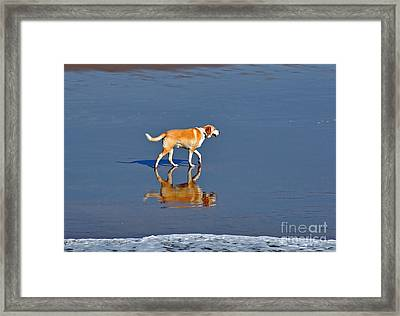 Dog On Water Mirror Framed Print