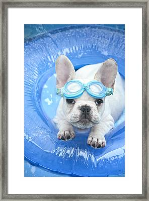 Dog Paddle Framed Print by Lisa Jane