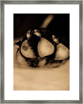 Dog Paw Framed Print by Jamie Bishop