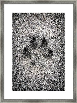 Dog Paw Print In Sand Framed Print by Elena Elisseeva
