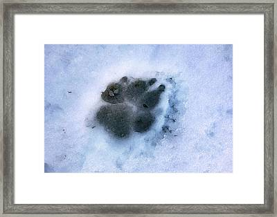 Dog Paw Print In The Snow Framed Print by Cordelia Molloy