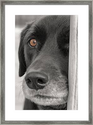 Dog Peek A Boo Framed Print