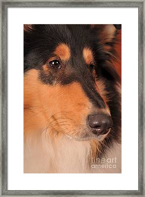 Dog Portrait Framed Print by Randi Grace Nilsberg
