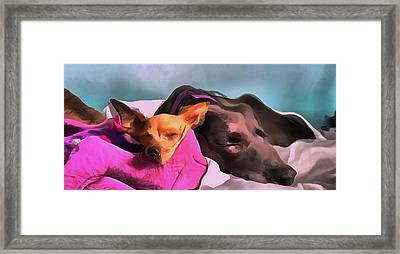 Dog Portrait Two Dogs Resting Together In Magenta And Gray In Acrylic Framed Print by MendyZ