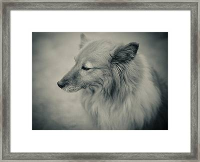 Lonely Dog Framed Print by Pro Shutterblade