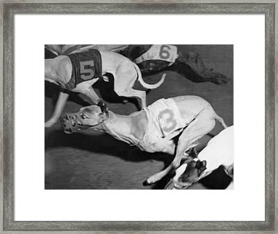 Dog Racing Track Framed Print by Underwood Archives