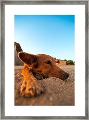 Dog Relaxing On A Beach Framed Print