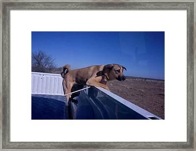 Dog Riding In Pickup Truck Framed Print