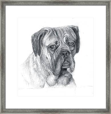 Framed Print featuring the drawing Boxer Dog by Rose Wang
