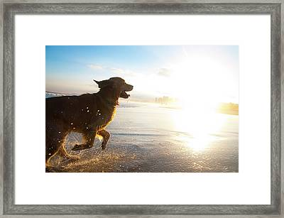 Dog Running On The Beach Framed Print by Giovani Cordioli
