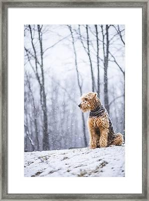 Dog Sits Under The Snowfall Framed Print