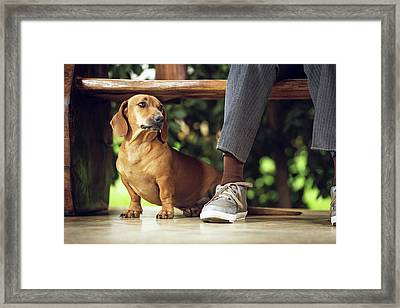 Dog Sitting On Floor Under Table Framed Print by Ktsdesign