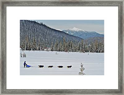 Dog Sled Races Are A Popular Winter Framed Print by Richard Wright