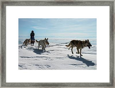 Dog Sledding Framed Print by Louise Murray