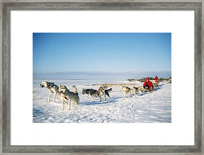 Dog-sledding With Huskies Framed Print by Chris Martin Bahr