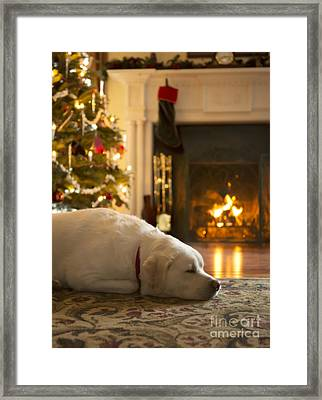 Dog Sleeping By The Christmas Tree Framed Print